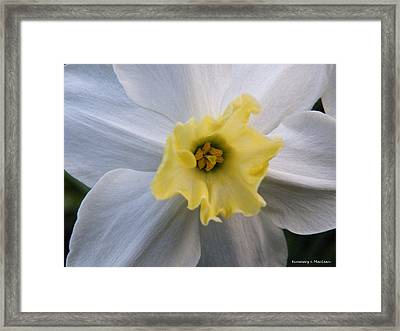 Daffodil Emotions Framed Print