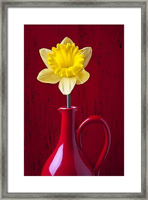 Daffodil In Red Pitcher Framed Print by Garry Gay