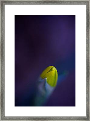 Framed Print featuring the photograph Daffodil by Jane Melgaard