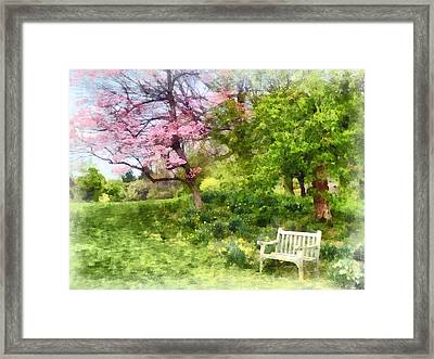 Daffodils By Bench Framed Print by Susan Savad
