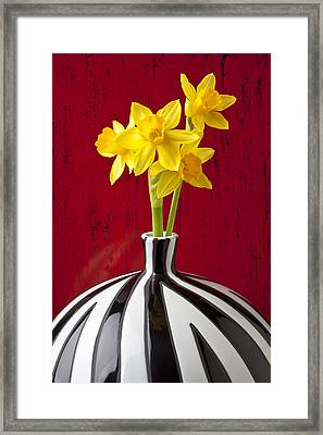 Daffodils Framed Print by Garry Gay