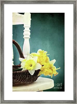 Daffodils In Spring Framed Print by Stephanie Frey