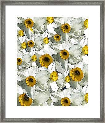Daffodils Framed Print by Patricia Januszkiewicz