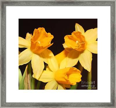 Dafodil Framed Print by Lorraine Louwerse