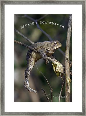 Dagnabit Now What Framed Print
