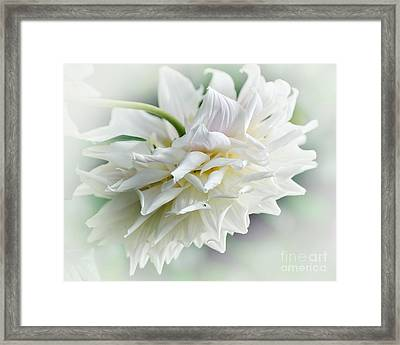 Dahlia And Sunshine Framed Print