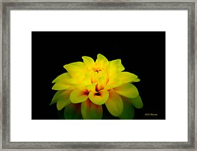 Framed Print featuring the photograph Dahlia Delight by Jeanette C Landstrom