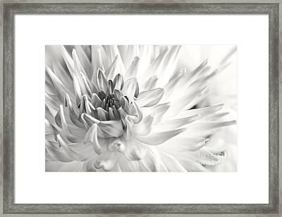 Dahlia Flower 02 Framed Print by Nailia Schwarz