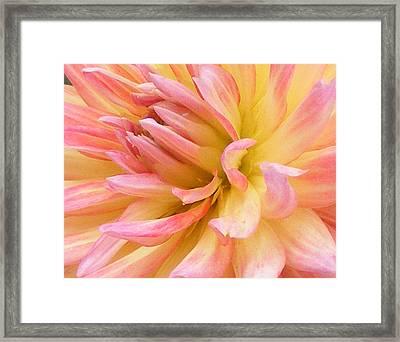 Dahlia Glow Framed Print