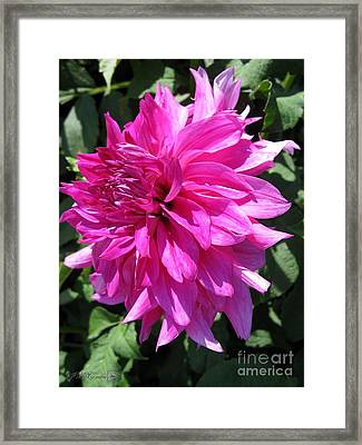 Dahlia Named I'm A Hottie Framed Print by J McCombie