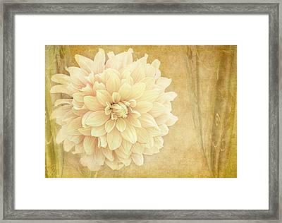 Dahlia Show Framed Print