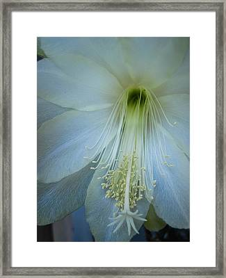 Dainty Beauty Framed Print by Cheryl Perin