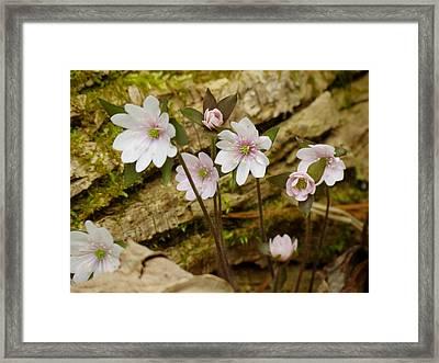 Dainty Flowers Framed Print