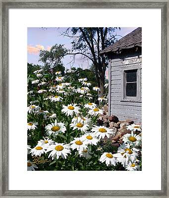 Daises Delight II Framed Print