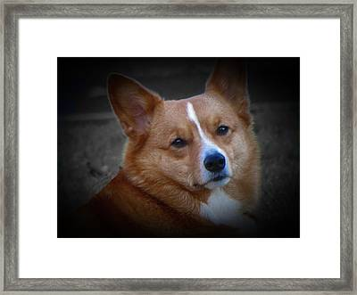 Daisie Our Corgi Framed Print