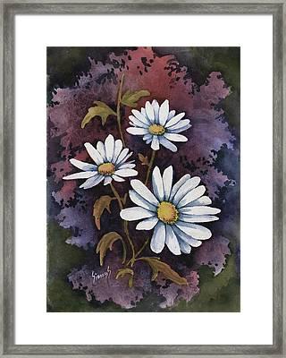 Daisies IIi Framed Print by Sam Sidders