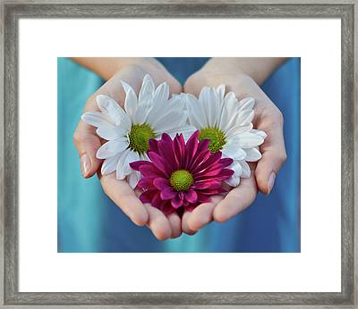 Daisies In Child Hands Framed Print by Natalia Ganelin