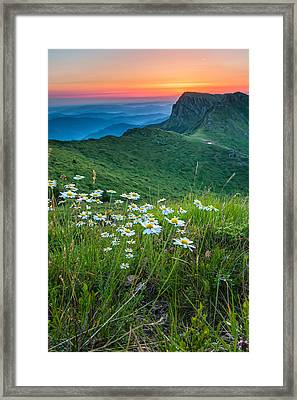 Daisies In The Mountyain Framed Print by Evgeni Dinev