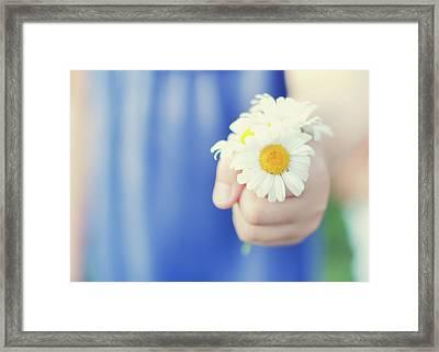 Daisies Framed Print by Michele Quattrin; mQn Photography
