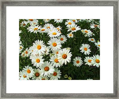 Framed Print featuring the photograph Daisies by Wendy McKennon