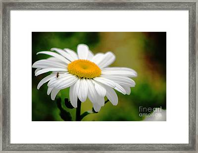 Daisy And The Bee Framed Print