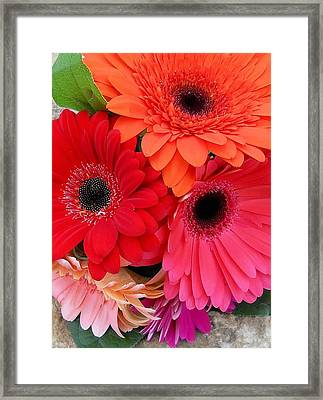 Daisy Bouquet Framed Print by Lynnette Johns