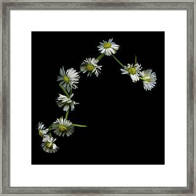 Daisy Chain Framed Print by Photograph by Magda Indigo