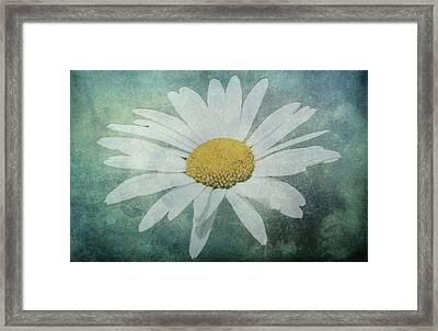 Daisy Framed Print by Dawn OConnor