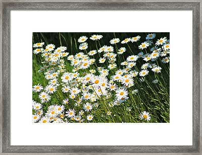 Daisy Day's Framed Print by Karen Grist
