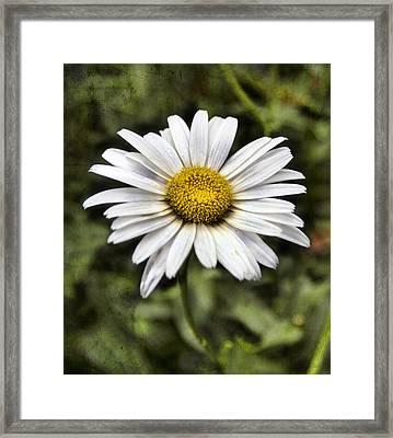 Daisy Dazzle Framed Print
