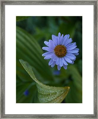 Framed Print featuring the photograph Daisy Dew by Cheryl Perin