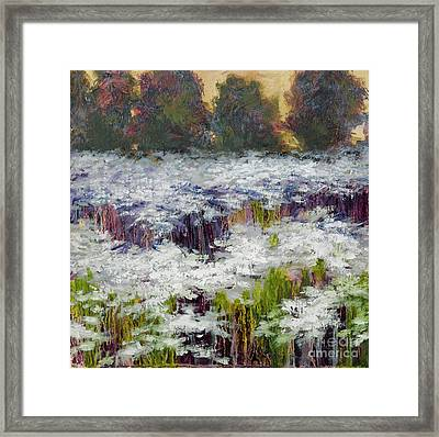 Daisy Field Framed Print by Vic  Mastis