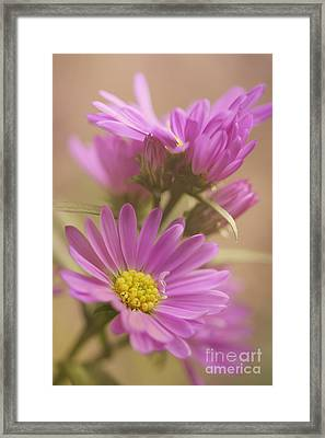 Daisy Framed Print by LHJB Photography