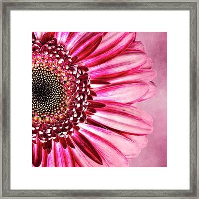 Daisy IIi Framed Print by Tamyra Ayles