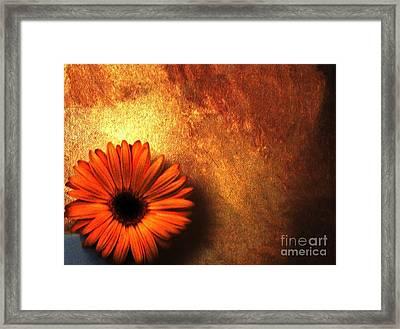 Daisy In A Corner Framed Print by Marsha Heiken