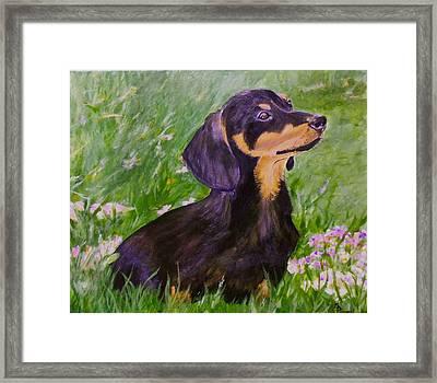 Daisy In Clover Framed Print