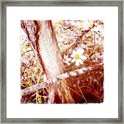 Daisy In The Rough Framed Print by Frank Winters