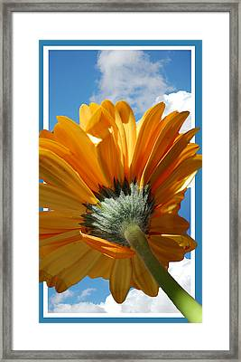 Daisy In The Sky Framed Print by Rozalia Toth