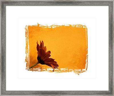 Daisy In The Yellow Corner Framed Print by Marsha Heiken