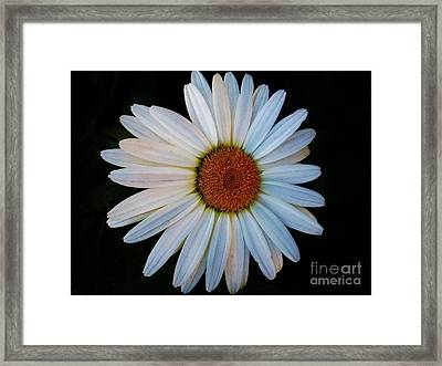 Framed Print featuring the photograph Daisy by Jasna Gopic