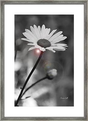 Daisy Lens Flare Framed Print by Suzanne Gaff
