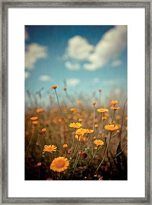 Daisy Meadow Framed Print by Boston Thek Imagery