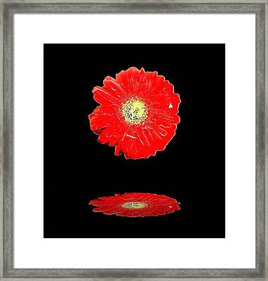Framed Print featuring the photograph Daisy Reflection by Carolyn Repka