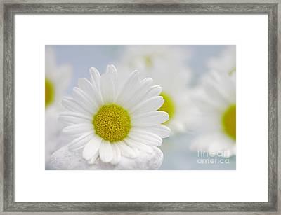 Daisy Sky Framed Print