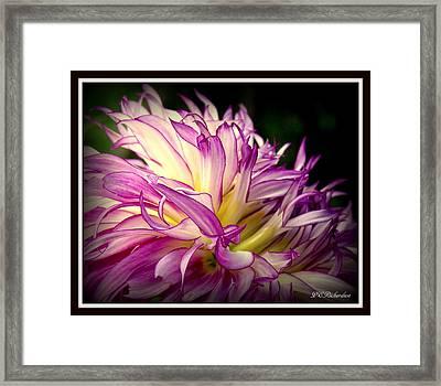 Dally Framed Print by Priscilla Richardson