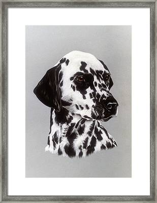 Dalmatian Framed Print by Patricia Ivy