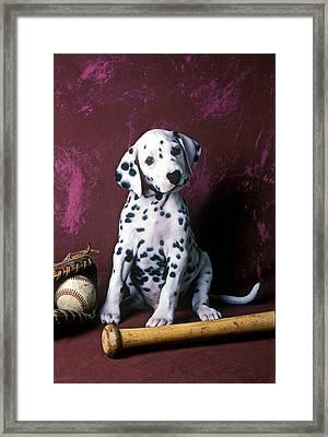 Dalmatian Puppy With Baseball Framed Print by Garry Gay