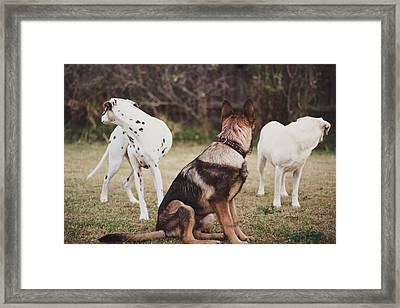 Dalmatian ,shepherd ,labrador Dog Framed Print