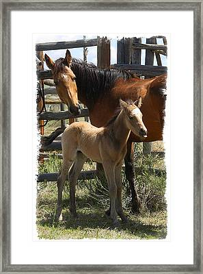 Framed Print featuring the photograph Dam And Foal by Judy Deist