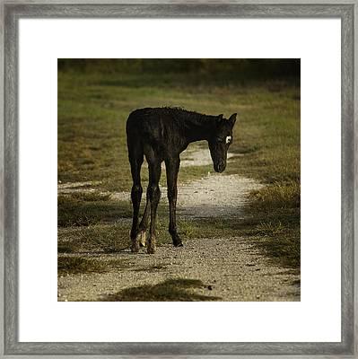 Damp Cracker Foal Framed Print by Lynn Palmer
